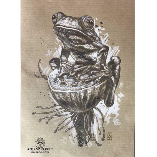 Grenouille sur lotus - dessin original sur papier kraft par Roland Perret - série des crapauds et grenouilles