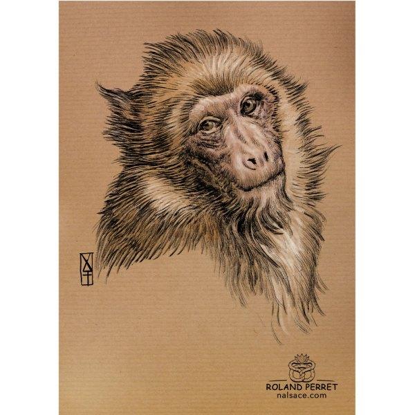 Macaque - dessin original sur papier kraft par Roland Perret - série des singes