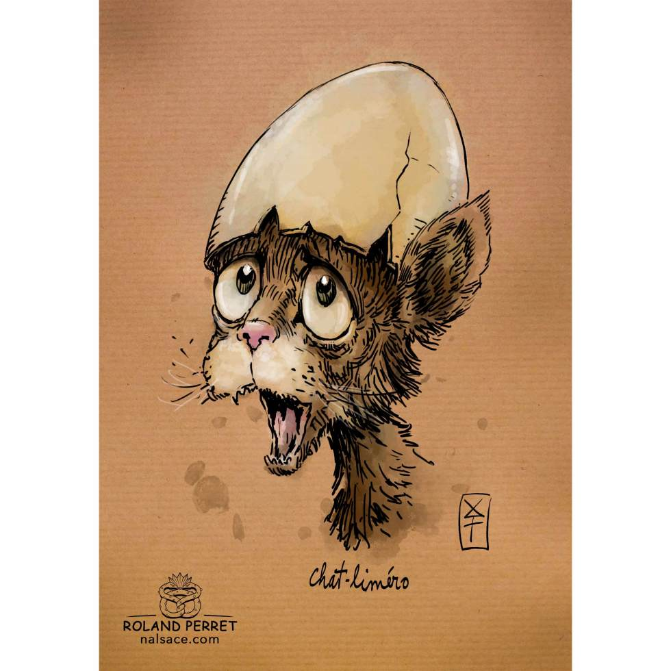 Dessin de chat faisant son Caliméro par Roland Perret, jeu du Chat-llenge. www.nalsace.com