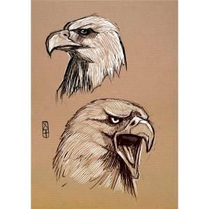 Etudes de têtes d'aigles- dessin original sur papier kraft par Roland Perret - série des rapaces. nalsace.com