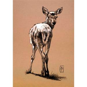Faon - dessin original sur papier kraft par Roland Perret - série des cervidés. nalsace.com