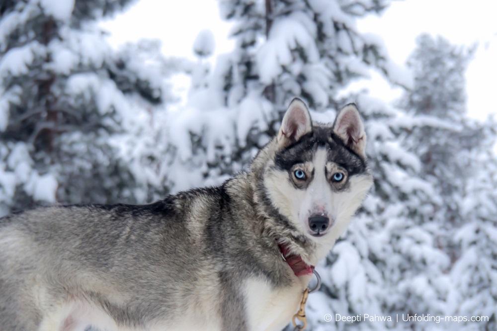 Wildlife in Lapland