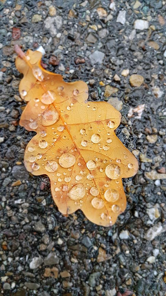 Photo of a n autumn leaf