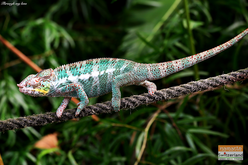 Rope Walk at Masaola Rain Forest attractions - The Colourful Chameleons