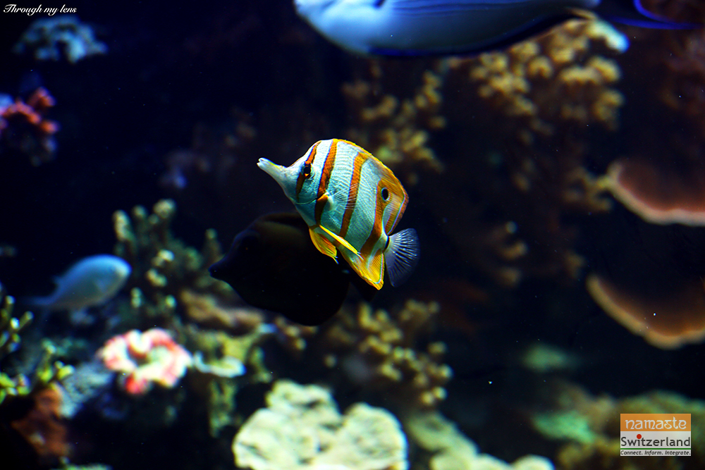 Colourful Fishes in the Aquarium