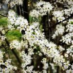 Spring-Summer Blossoms