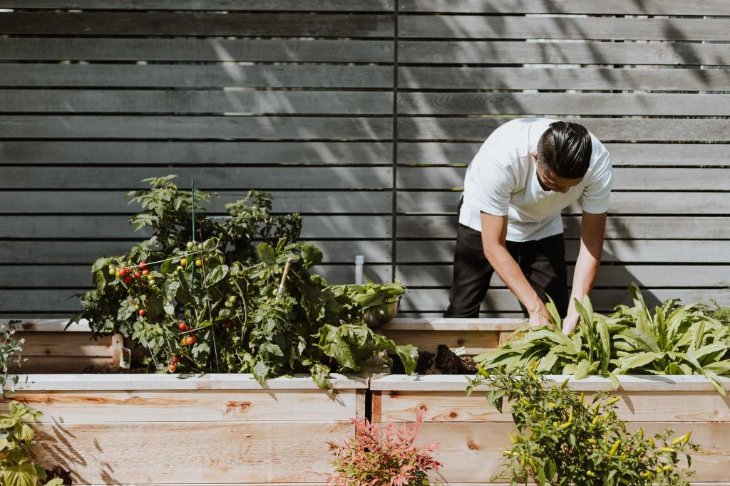 chef collecting produce