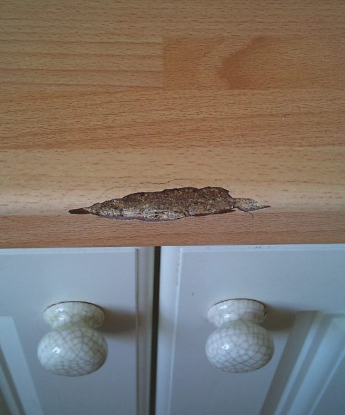 CHIPPED BULL NOSE WORKTOP REPAIR