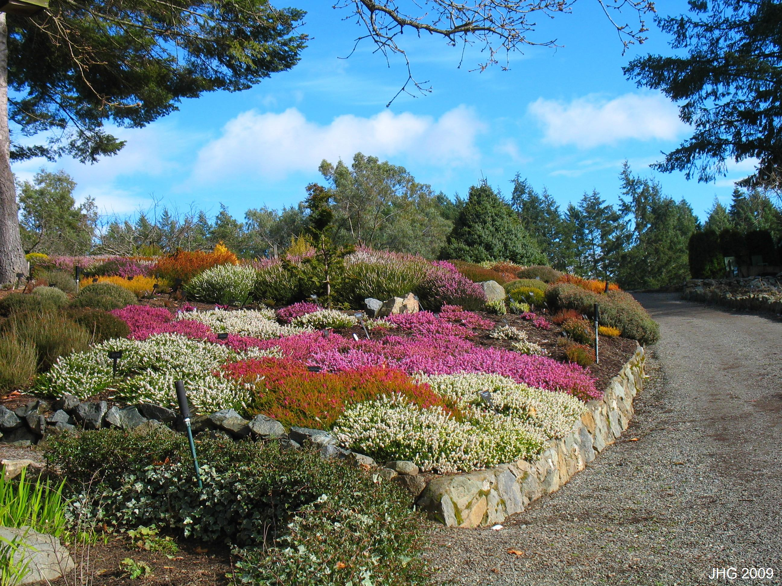 Dazzling color display with dwarf conifer in the background.