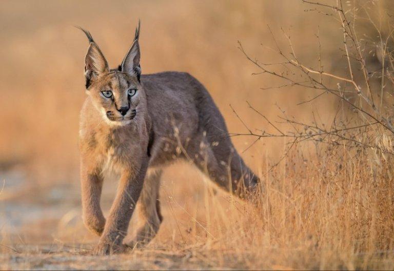 Wildlife Veterinary Program