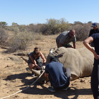 wildlife vet safari