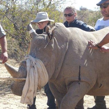 wildlife vet safari