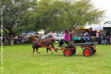 A horse-and-cart with a pretty jingle-jangle harness