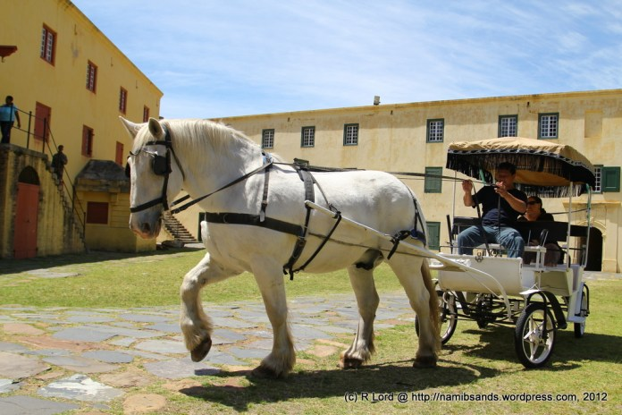 A cart drawn by one of the stunning Percherons