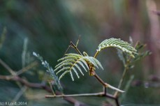 Dew-soaked fern