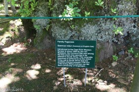 Sign in front of the old English oak tree