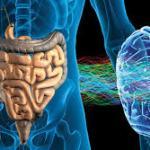 脳と腸の関係について