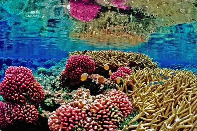 サンゴ礁の役割と現在の課題!白化の原因も