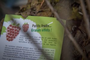 20161123-distribution-fruitiers