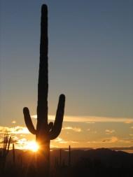 Arizona 312!