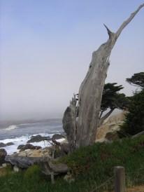 california 210