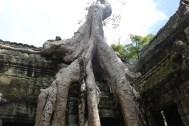 *Angkor-13.59.00