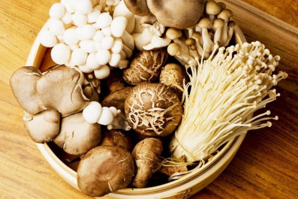 nấm có khả năng hấp thụ vitamin