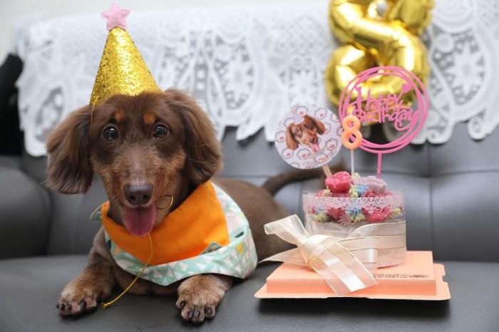 8月份壽星。辣奇LUCKY 滿八歲 生日快樂,我永遠的小寶貝  2020/109.08.05