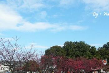 ┌寵物一起旅行┐獨一無二來去警局賞櫻花❤2014泰安派出所賞櫻花2/2花況
