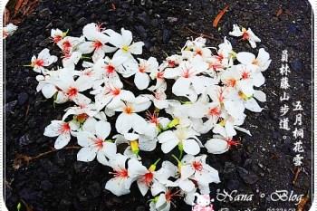 【員林旅遊景點】遇見雪的4月天-桐花❤員林藤山步道。桐花季