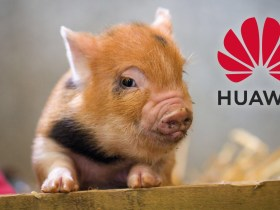 Huawei turns to pig farming, mining as smartphone sales continues to drop by 60% due to Google ban