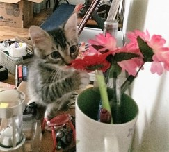 playing with flowers
