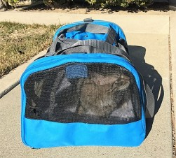 back-in-carrier