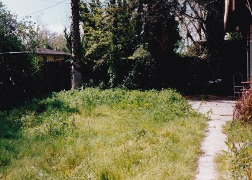 back-yard-overgrown-1