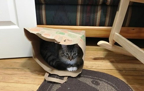 Foster in bag