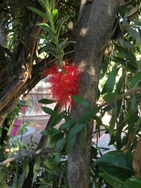 bottle brush 1