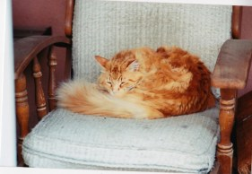 scamper on chair