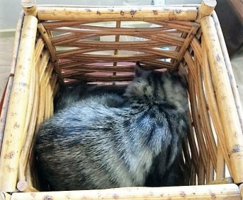 in wicker basket3