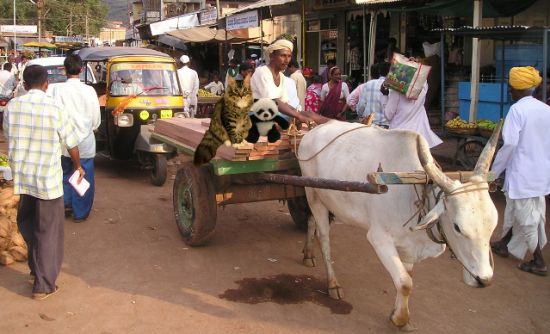 on ox cart2