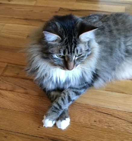 crossed paws