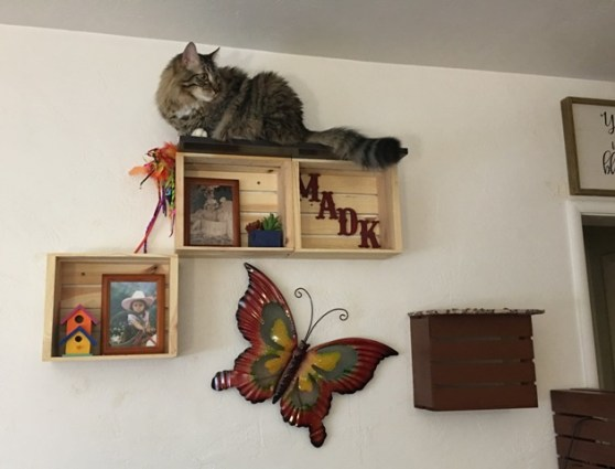 Foster on MADK shelf
