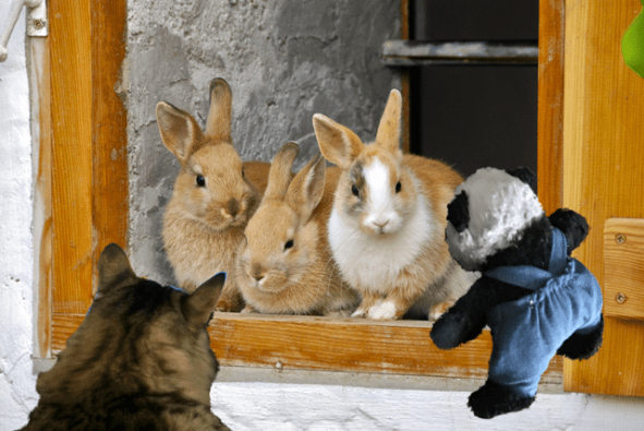 seeing rabbits sm