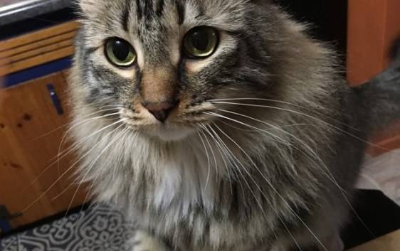 whiskers 1