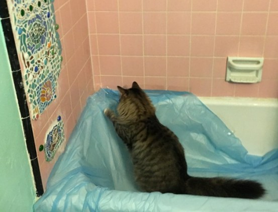 Foster in tub 2