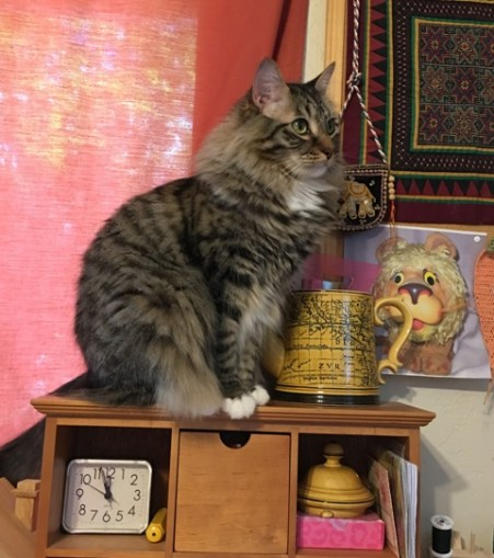 sewing room cat