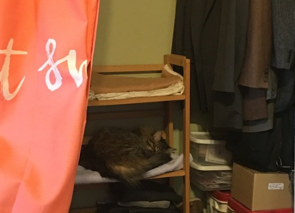 Foster on sewing room shelf