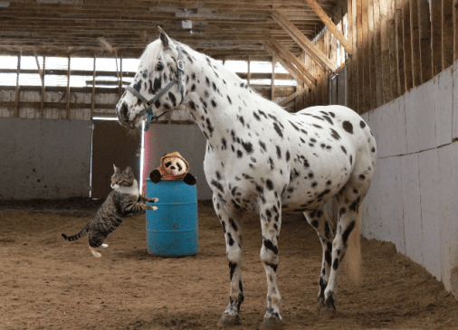a in horse stall