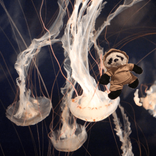 a panda on jellyfish
