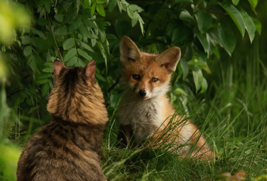 a Foster and Fox