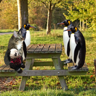 picnic with penguins